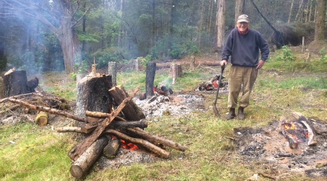 Burning stumps: After a year of seasoning the remains of the larches, we decided it was time to clear them …